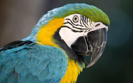 Curso online de Auxiliar Veterinario Especialista en Animales Exóticos