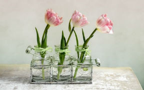 Curso en línea (Online) de Decoración con Plantas y Flores