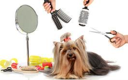 Curso Básico a distancia de Salud de la Piel y el Pelo y Peluquería Canina